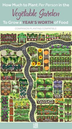 How Much to Plant Per Person in the Vegetable Garden for a Year's Worth of Food - Garden - If you find yourself struggling to try to figure out how much to plant per person in the garden for - Veg Garden, Edible Garden, Easy Garden, Garden Art, Veggie Gardens, Vegetables Garden, Home Vegetable Garden Design, Vegetable Garden Layouts, Garden Planting Layout