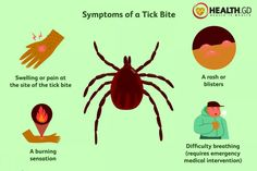 Tick Bite Symptoms, Tick Fever, Wood Tick, Human Body Diagram, Lyme Disease Tick, Types Of Ticks, Rocky Mountain Spotted Fever, Deer Ticks, Skin Rash