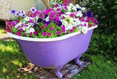 Petunias And Calibrachoa Shining All Season Petunias in Bathtub Container.a use for that old bathtub!Petunias in Bathtub Container.a use for that old bathtub! Garden Bathtub, Old Bathtub, Clawfoot Bathtub, Painted Bathtub, Vintage Bathtub, Bathtub Ideas, Pot Jardin, Garden Accessories, Cool Plants