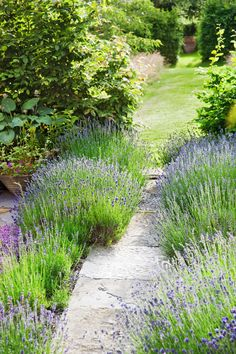 "Genus: Lavandula spp. Zones: 5 to 9 Cost: $6 to $10 Expert Says: ""Lavender's practically indestructible, genuinely deer-resistant, and comes in beautiful hues."" —Robert Kourik, garden designer, Sebastopol, California - CountryLiving.com #gardeningdesign"