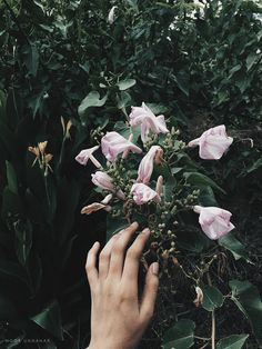 dark floral aesthetic // tumblr grunge photography ideas inspiration, instagram creative photos floral indie pale hipsters //