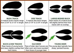 Deer hunting tips http://riflescopescenter.com/category/hawke-riflescope-reviews/
