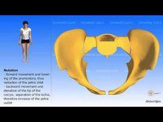 Arthrology of the pelvis Nutation and counternutation Childbirth 3d Anatomy, Prenatal Workout, Baby Birth, Births, Pta, Women's Health, Youtube, Muscle, Babies