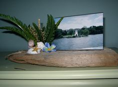 This Framed Photo is on a piece of reclaimed driftwood from the Chesapeake Bay Region, it's now the base for this photo I took In Rehobeth Beach, Delaware.  I added seashells, dried and silk flowers.  $28.00