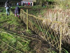 willow fencing - Google Search