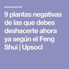 9 plantas negativas de las que debes deshacerte ahora ya según el Feng Shui | Upsocl