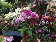 Orchid arrangements--