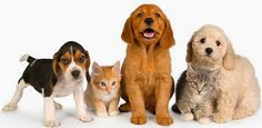 Online pet shop provides numerous options and  significant quantity of pet supplies online at  reasonable rates.