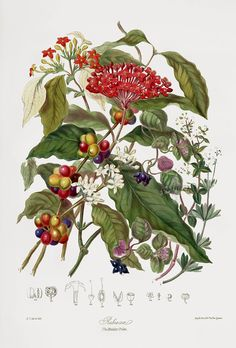Elizabeth Twining Natural Order of Plants 1849