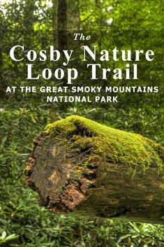 Cosby Nature Loop Trail at the Great Smoky Mountains National Park - Southeastern Traveler Mountain Vacations, Family Vacation Destinations, Mountain Hiking, Vacation Spots, Family Vacations, Great Smoky National Park, Smoky Mountain National Park, National Parks, Whiskey Trail