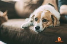 You have found the dog you want and are anxious to bring him home. You may be wondering if you are ready for this responsibility. You may be worrying that your family is not prepared. You don't want these kinds of worries and concerns to...