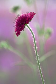 Tips on garden and plant photography by Philip Smith – founder of International Garden Photographer of the Year Wind rain, sun and cloud; all essential ingredients in powerful garden and plant photography. Quite often if I'm running a workshop in the summer I will arrive at the venue just after...