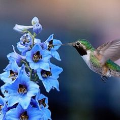 love those tiny little hummers