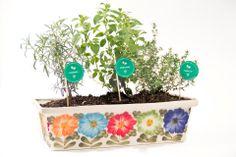 Tomillo-Oregano-Romero Matera con tres plantas Aromaticas.   Jardin de Ana