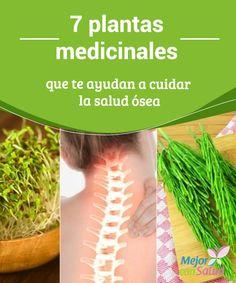 7 #plantas medicinales que te ayudan a cuidar la #salud ósea Los nutrientes y #propiedades de algunas plantas medicinales pueden ayudar a mantener la salud ósea en buenas condiciones. ¿Las conoces? ¡Descúbrelas! #RemediosNaturales