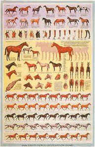 Horse Information Chart