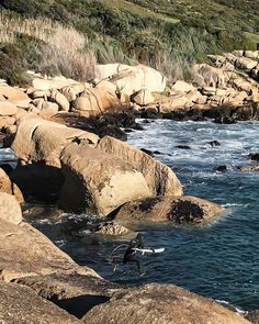 Sandy Bay Africa Travel, South Africa, Water, Instagram Posts, Outdoor, Water Water, Outdoors, Outdoor Games, The Great Outdoors