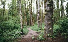 John Westrock Photography | Landscapes | Washington State | Forest Path