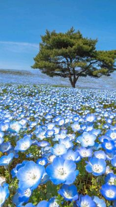 Beautiful Nature Pictures, Beautiful Nature Scenes, Nature Photos, Amazing Nature, Beautiful World, Art In Nature, Beautiful Flowers Pics, Beautiful Nature Photography, Most Beautiful Wallpaper