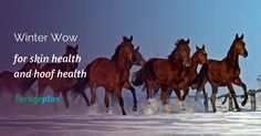 Winter Wow for hooves, skin, coat, digestion, brain, tendons, joints, ligaments and all round horse health.  Feed our range of ultra low iron, Forage Focused™ winter horse feed balancers for optimum winter health, weight and performance.  Our range of winter horse feed balancers start with the forage your horse eats and are designed to supplement and match to the common deficiencies in the grass, hay or haylage.