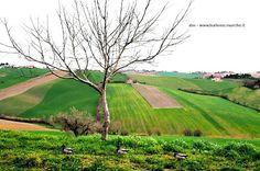Near Senigallia, Marche - Italy