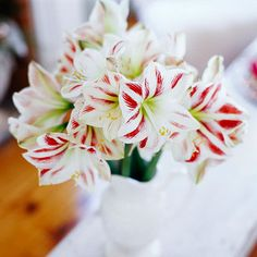 Sweet Blossoms:   Look beyond the poinsettia for winter flowers: Gather a stunningly simple bouquet of 'Candy Cane' amaryllis that last longer than many typical cut flowers.