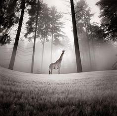 Luis Beltran Photography