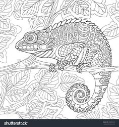 Zentangle Chameleon Sitting On A Tree Branch. Coloring Page I 398000323 : Shutterstock