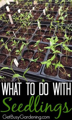 This is such a problem of mine! I start my seeds, and then I never know what to do with seedlings after they sprout. Then I end up buying plants from the nursery anyway.  These are such great tips, and I'm going to follow them this time so I don't have to buy plants this year!