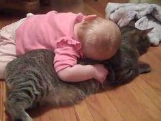 18 motivos para você nunca ter um gato