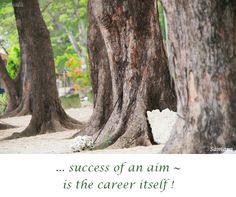... #success of an #aim ~ is the #career itself !