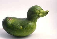 The Absolute Best Zucchini Recipes 【ツ】.and a zucchini duck! Weird Fruit, Funny Fruit, Strange Fruit, Funny Food, Weird Food, Funny Vegetables, Fruits And Vegetables, Best Zucchini Recipes, Weird Shapes