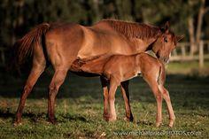 2 day old foal nursing