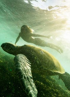 Its my dream to one day swim with seaturtles! That will probably be the happiest moment of my life!!
