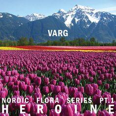 Varg - Nordic Flora Series Pt. 1: Heroine