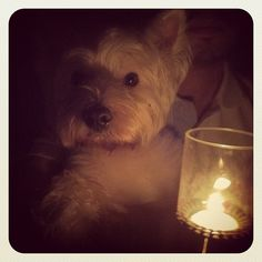 Mac hopes you are observing #EarthHour too.
