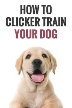 Teach Your Dog to be....Home… #stopbarking Petsmart Dog Training, Bird Dog Training, Dog Training Come, Police Dog Training, Puppy Training Classes, Therapy Dog Training, Dog Clicker Training, Dog Training Tools, Agility Training For Dogs