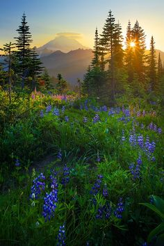 Wistfully Country, Mount Rainier Sunburst - Photograph at...