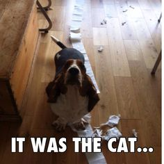 of course it was!!!!blame it on the cat.