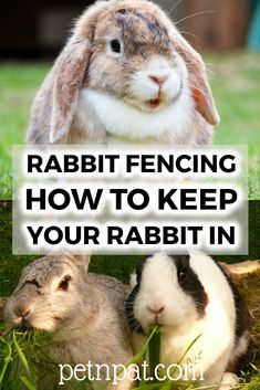 Rabbit Fencing: How To Keep Rabbits In Or Out Of Your Garden! #rabbits #pets #animals #bunny