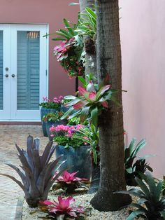 How to Hang Bromeliads in Trees in Palm Beach Landscapes