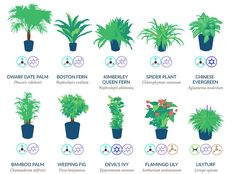 best-air-filtering-houseplants-nasa-3