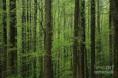 spring trees | Trees In Spring Photograph - Trees In Spring Fine Art Print