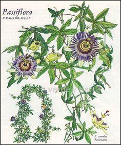 18 további pin a(z) Gardening táblára - xamina@azet.sk