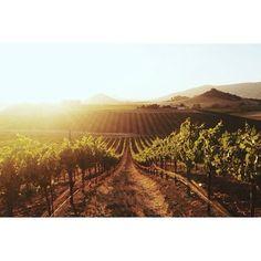 Wolff Vineyards - San Luis Obispo, CA
