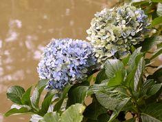 27 flores que adoram passar o dia no sol