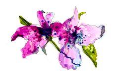 Magenta & Orchids