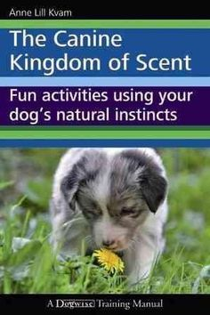 The Canine Kingdom of Scent: Fun Activities Using Your Dog's Instincts