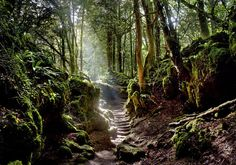 Puzzlewood, Gloucestershire, England The inspiration for The Lord of The Rings