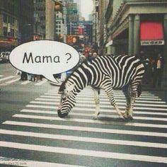 Pour plus clique ci-dessous Funny Memes Images, Crazy Funny Memes, Funny Video Memes, Really Funny Memes, Stupid Memes, Funny Relatable Memes, Haha Funny, Funny Animal Jokes, Funny Animal Pictures